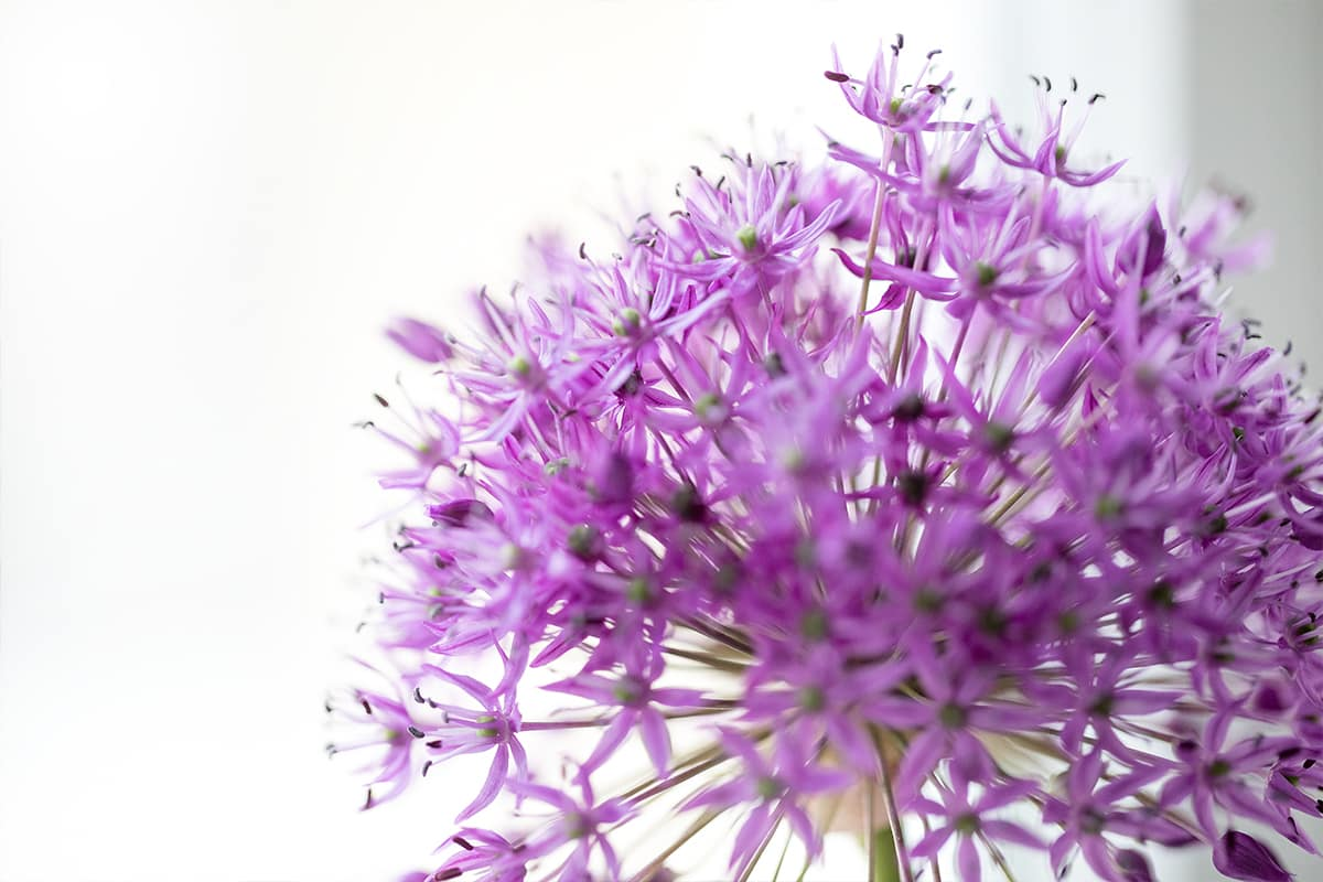 Impressionen frische Blumen in Physiotherapie Praxis Denzlingen